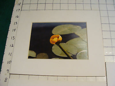 PHOTOs 3 from SHEPARD LAKE 1978 signed PLM