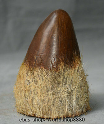 """4"""" Collect Old Chinese Ox Horn Dynasty Bull Oxen Oxhorn Statue Decoration AA3"""