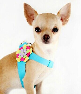 Flower Dog HARNESS & LEAD SET BLUE puppy cat small dogs chihuahua pug xsmall