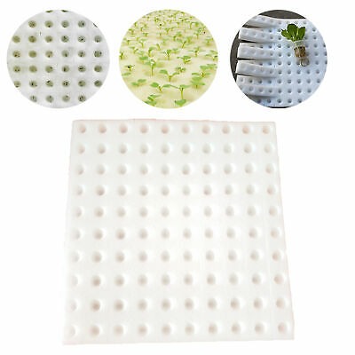 """100Pcs 1"""" Cube Sponge For Hydroponic Seed Starting Plant Sprouter Tray Pot Cup"""
