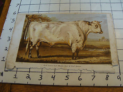 Vintage Print: short horned Bull Wiseton bred by Spencer  w. h davis print