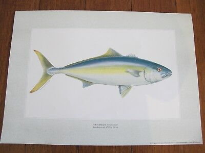Artist fish prints - collectable