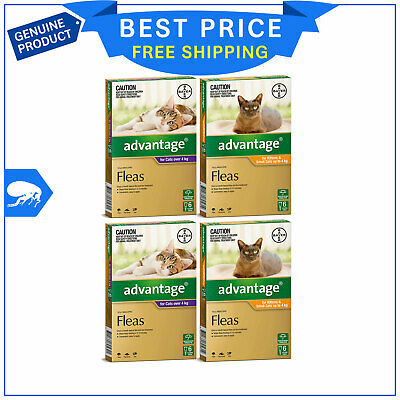 ADVANTAGE for Cats All Sizes 12 Pipettes + FREE 4 Pipettes Cat Flea treatment