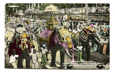 "Ceylon early 20th C unposted colour PPC ""Temple Elephants / Perahera Procession"""
