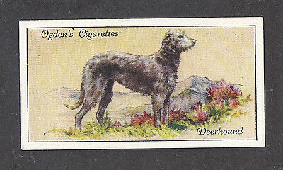 1936 UK Dog Art Full Body Portrait Ogden's Cigarette Card SCOTTISH DEERHOUND
