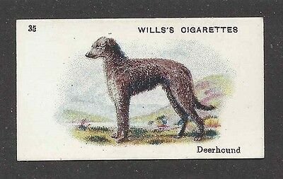 1914 Dog Art Body Portrait Wills Australia Cigarette Card SCOTTISH DEERHOUND