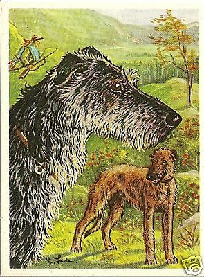 Rare 1952 Dog Art Print Card Austria Tobacco Company Bildwerk SCOTTISH DEERHOUND