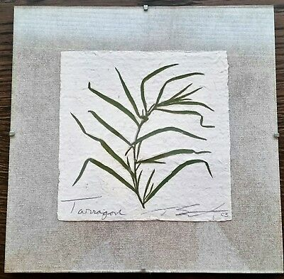 Thomas Siciliano Original Signed Handmade Tarragon Herb Paper