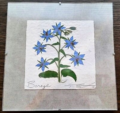 Thomas Siciliano Original Signed Handmade Borage Herb Paper