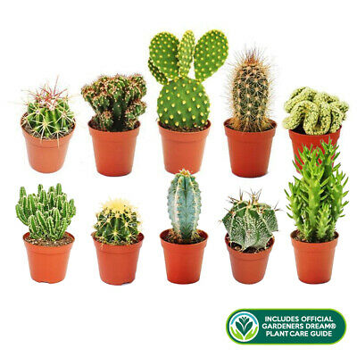 10 X Different Mixed Cactus Collection House + Gardeners Dream Plant Care Guide