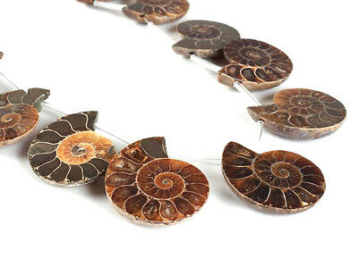0089 10pcs Side drilled Ammonite fossil loose gemstone beads 27mm to 30mm