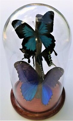 Multi Butterfly Mix in Glass Dome