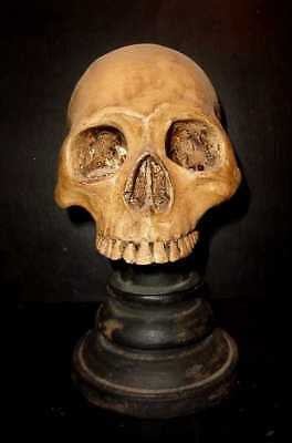 Vintage Life Size Hand Carved Teak Wood Human Skull On Stand.