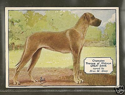 1938 UK Dog Art Photo Hand Colored Ardath Cigarette Card Named Fawn GREAT DANE