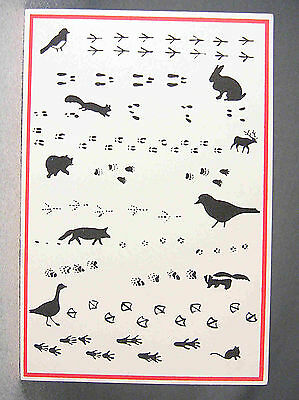 Skunk & Animals Footprint, Tracks Postcard by Hotmanprints, Lyme N. H.
