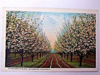 Antique 1928 Postcard An Orchard in Bloom Sacramento California Vintage POSTED