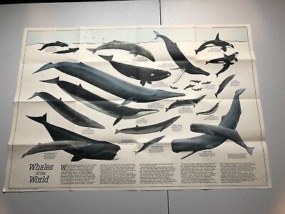 Vintage National Geographic Society WHALES OF THE WORLD Illustrated Poster