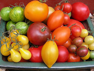 Tomato Seeds for 2019 : Pick a 6-Pack from 100+ Heirloom & Other Varieties