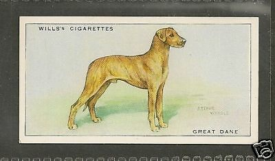 Rare 1937 UK Arthur Wardle Dog Art Wills Cigarette Card Brindle Uncrp GREAT DANE