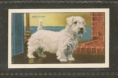 Rare 1936 UK Dog Art Full Body Study Gallaher Cigarette Card SEALYHAM TERRIER