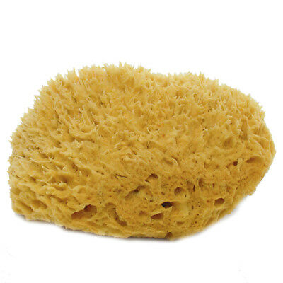 "Natural Sponge 7"", one lot includes 12 Individual Sponges"