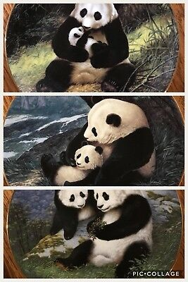 Set Of 3 Panda Plates By Will Nelson