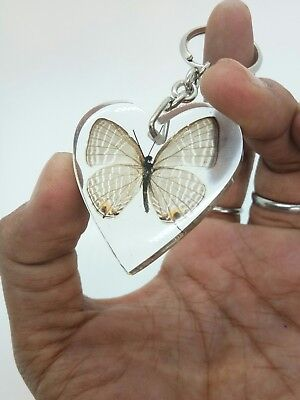 Real Butterfly in Clear Resin Heart Pendant Key Ring insect Gift Key Chain