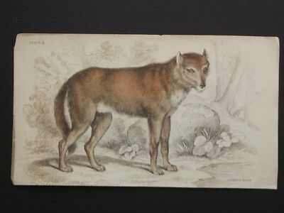 THE COMMON WOLF - ORIGINAL LIZAR'S 1830's HAND COLORED COPPER PLATE ENGRAVING