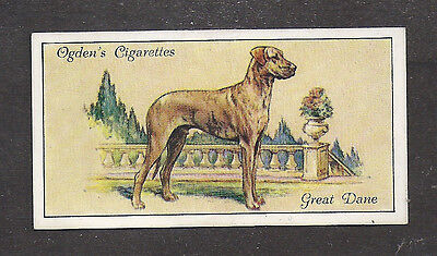 1936 UK Dog Art Full Body Portrait Ogden's Cigarette Card Brindle GREAT DANE