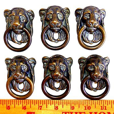 6 Antique Brass Lion Head Drawer Pulls Door Knocker Handle Pulls Solid Brass