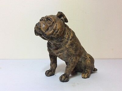 Antique Cold Painted Spelter Well Modelled English Bulldog Figure C1900