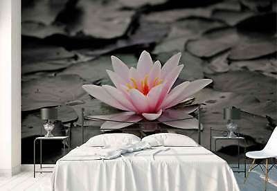 Water lily Pink Photo Wallpaper Wall Mural (FW-1046)