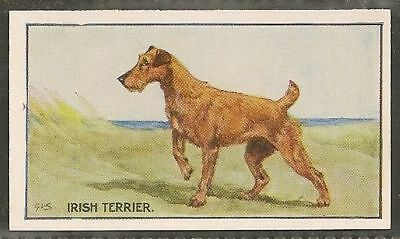 1926 UK George Vernon Stokes Dog Art Sanders Custard Jelly Card IRISH TERRIER
