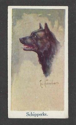 1924 UK Leo Chambers Dog Art Head Portrait Moustafa Cigarette Card SCHIPPERKE