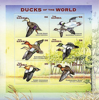 Gambia 2002 MNH Ducks of World Birds Teal Bufflehead Shelduck 6v M/S III Stamps