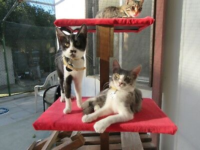 FEED A Cute CYPRUS CAT/KITTEN FOR CHARITY