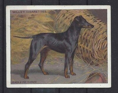 1915 OriginaL UK Wardle Dog Art Study Wills Cigarette Card MANCHESTER TERRIER