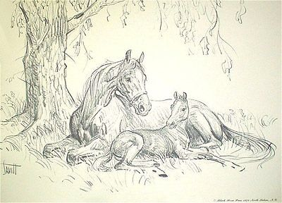 MARE AND FOAL UNDER TREE Charcoal Horse Print By Sam Savitt 1973 -BEST OFFER