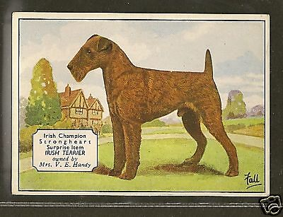 1938 UK Dog Art Photo Hand Colored Ardath Cigarette Card Champion IRISH TERRIER