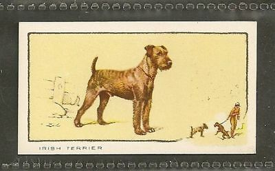 1934 UK Dog Art Full Body Study Portrait Gallaher Cigarette Card IRISH TERRIER