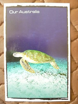 Postcard...green Turtle...our Australia Series..new/mint 2011..underwater Photo