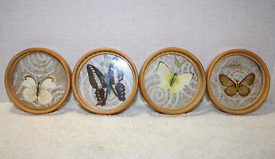 Vintage  Butterfly  Coaster Bamboo Rice Paper ,Glass & Plastic 4pcs