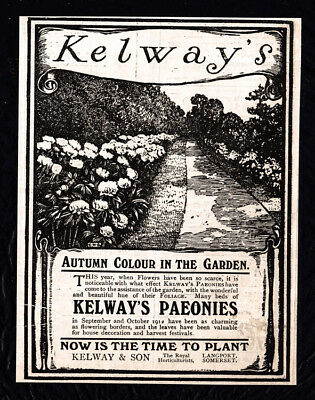 1911 Kelway's Paeonies vintage print ad - garden walk - Now is the Time to Plant