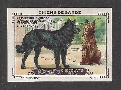 1931 France Nestle Cailler Kohler Dog Card BELGIAN SHEEPDOG BOUVIER DES FLANDRES