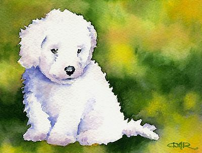 BICHON FRISE PUPPY Dog Watercolor 8 x 10 ART Print Signed by Artist DJR