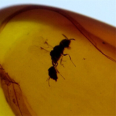 Fossil insect Natural Burmite Amber 100 million years old (Untreated) 4.05ct