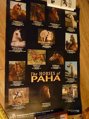 Large Promotional Poster for PA Arabian Horse club Arabians of PAHA 35 x 23