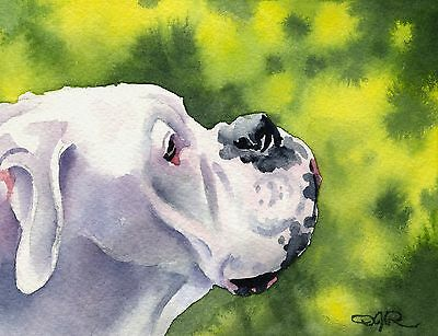 WHITE BOXER Dog Watercolor Painting 8 x 10 ART Print Signed by Artist DJR