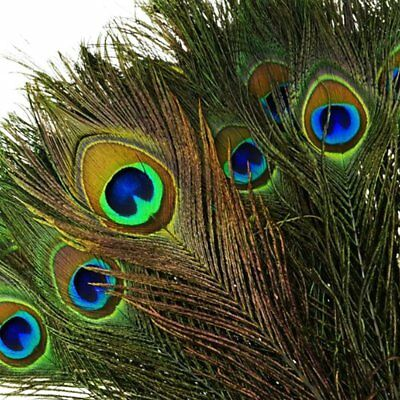 10-12 Inches Beautiful Peacock Tail Feathers for Jewellery Making Costumes Party