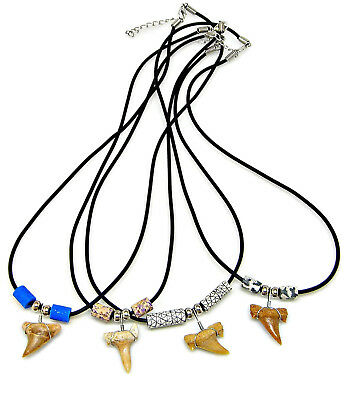 """20/"""" Fossil Shark Tooth Necklace 2 Color Choices Surfer Puka 8mm Coconut Shell Bd"""